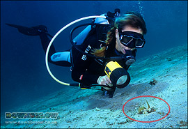 A Diver takes a look at a Fingered Dragonet