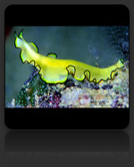 Flatworm & Tubeworm Marine Biology