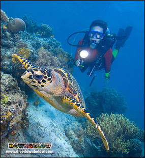 A diver with a Hawksbill turtle in the TAR Park (jo, turtle, diver, torch, light, coral)