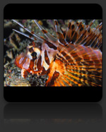 Lionfish Marine Biology