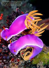 Colourful Nudibranchs - correct exposure allows us to paint with light