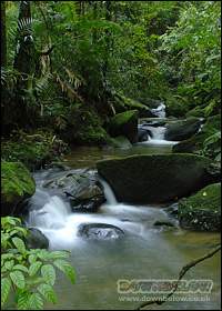 Sabah's Tropical Rainforests Have Many Beautiful Rivers