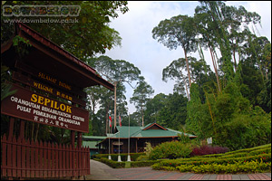 Welcome to the Sepilok Orang Utan Sanctuary
