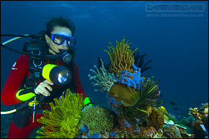 A Diver inspect the corals up close