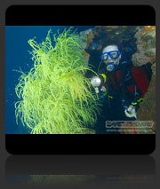 Lankayan Island Scuba Diving Package