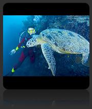 Sabah borneo dive sites dive downbelow - Sipadan dive centre ...