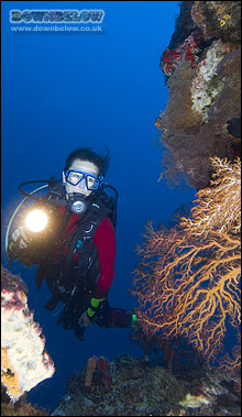 Dive Beautiful Coralscapes in the Tunku Abdul Rahman Marine Park