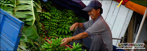 A local farmer preparing his produce for the market (farmer, fruit, bananas, market, truck, sabah, man)