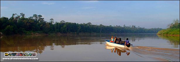 Cruising the Kinabatangan River in a little, white boat