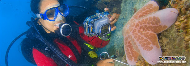 Learn how to capture your magical moments underwater with Downbelow's Digital Underwater Photography course