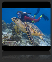 Learn to dive first steps - Discover Scuba Diving Course