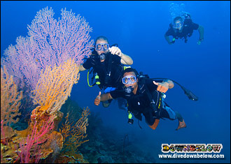A group of divers enjoying the underwater beauty of fan corals