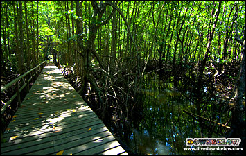 The trail winds through the mangrove swamp, an interesting intertidal zone