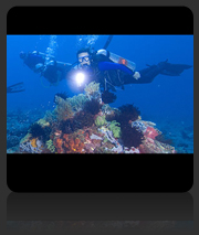 PADI Master Scuba Diver with Downbelow