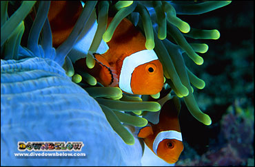 Bring youngsters for a personal meet-and-greet with Nemo (Clownfish)