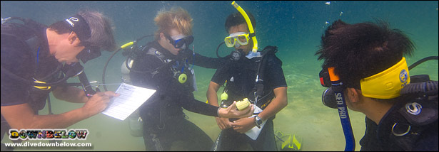 Downbelow's resident PADI Course Director and Go Pro team will guide you every step of the way
