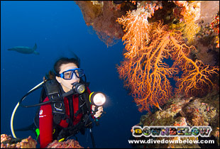A quick reminder later and you'll be diving beautiful corals again in no time