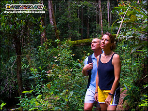 Jungle Trekking through Gaya Island's virgin rainforest