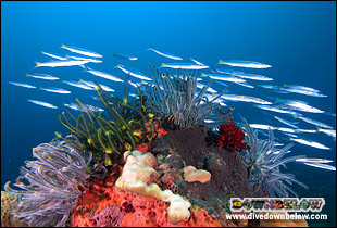 Beautiful corals in the underwater world