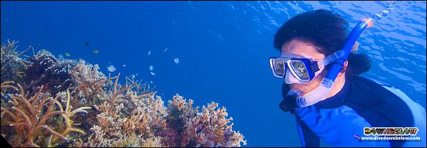 Corals found around Sabah