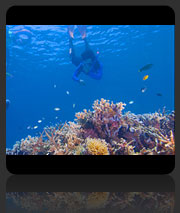 AWARE Coral Reef Conservation Course