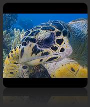 Selingan - Turtle Island