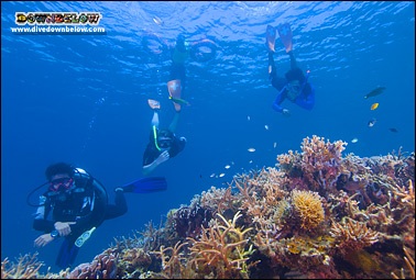 Snorkelers getting a closer look at the beautiful coral reef