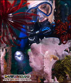 Diver with a pink frogfish in the TAR Park