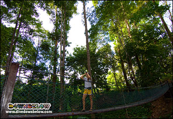 The jungle trails around the Rainforest Discovery Centre includes suspension bridges