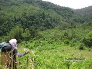 Dense jungle during the Salt Trail jungle trekking