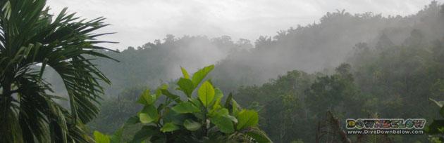Salt Trail Jungle Trekking in the Crocker Range Mountains, Sabah