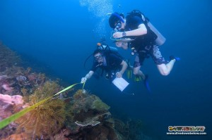 Careful measurements of the TAR Park coral reefs