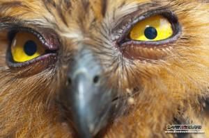 Real life angry bird on gaya island