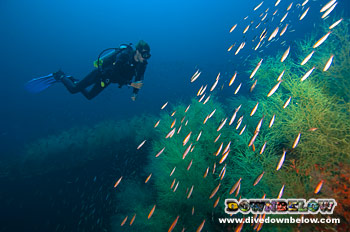 The beautiful marine environment that has blossomed around the tragedy of the Second World War