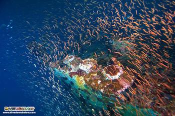Usukan Bay Wrecks: life thrives where lives where lost