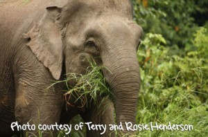 Elephants seen in Borneo during Terry & Rosie Henderson's Downbelow holiday