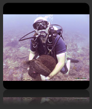 Coral Replanting Project May 2013