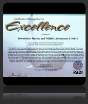 PADI Award of Excellence