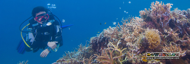 Get more out of reefs with the AWARE Coral Reef Conservation course