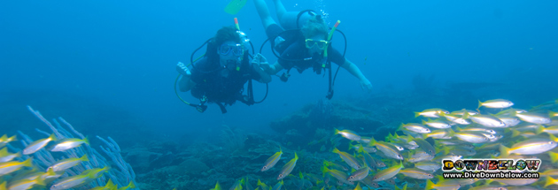 AWARE divers enjoying the splendor of the coral reefs