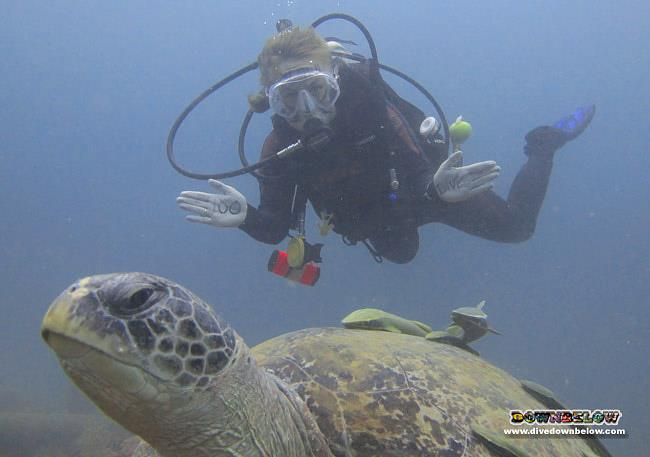 Sara's 100th dive pic, photo-bombed by a big, old turtle
