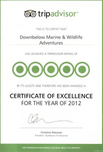 The Certificate of Excellence that Trip Advisor sent us in recognition of our consistent rating