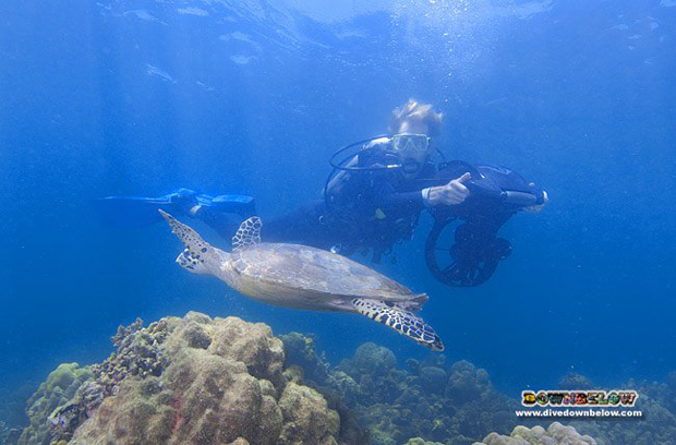 Excellent value for money when you include a speciality dive course with your diving package