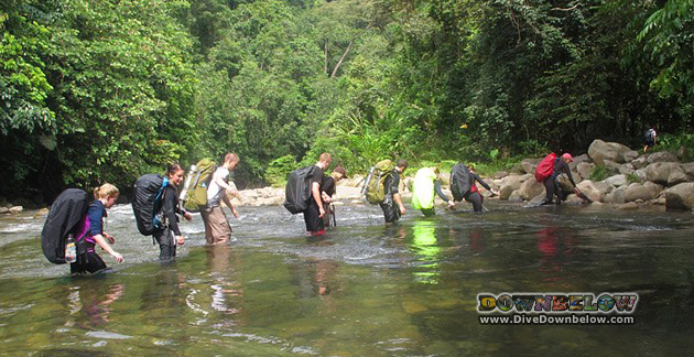 Our recent group of Borneo Adventurers crossing a river on the Salt Trails