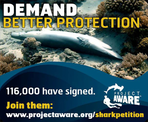 Sign the shark petition here!