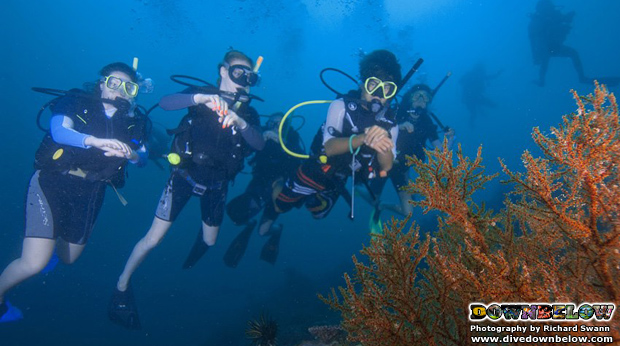 young-adventures-discovering-borneo-reefs
