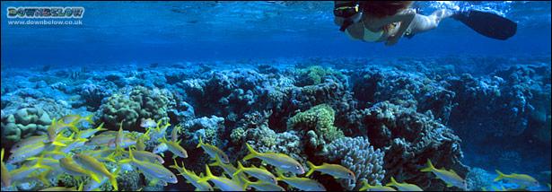 mast-snorkeling-tar-park