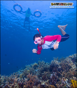 snorkelers-underwater-float-rings-coral