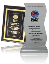 Downbelow was awarded Outstanding Contribution to Instructor Development by PADI