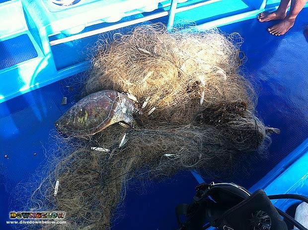 1803_rip_turtle_620px